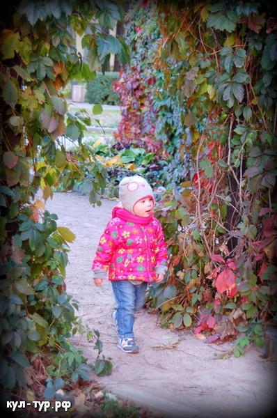 холодная осень замёрший виноград