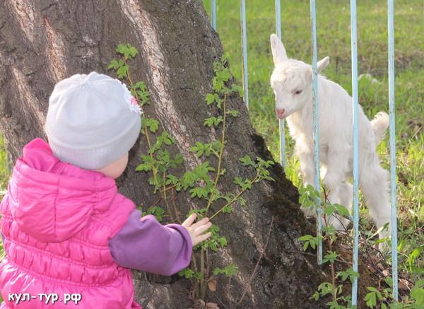 дочка играет с козлёнком
