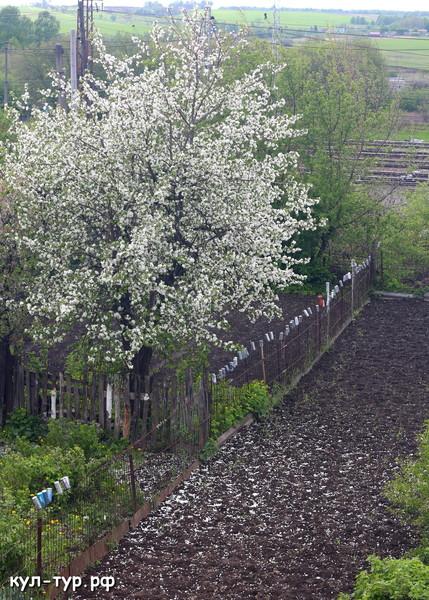 цветы весна лето