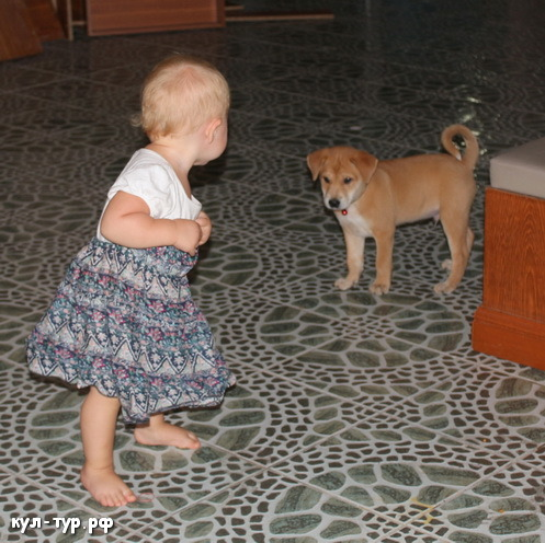 ребёнок играет с собакой