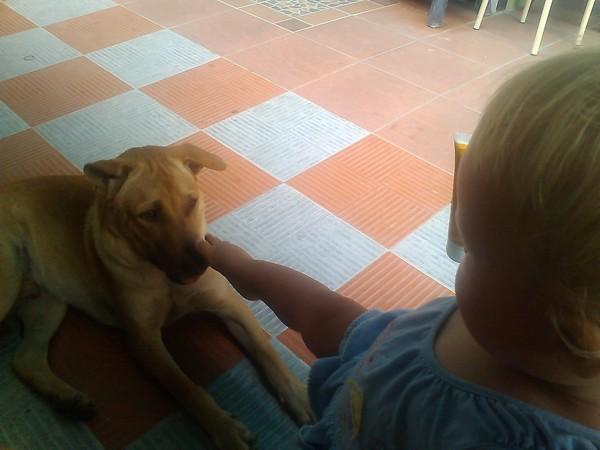 домашняя собака в Тайланде