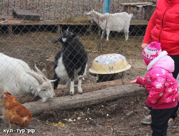 кормить животных в деревне