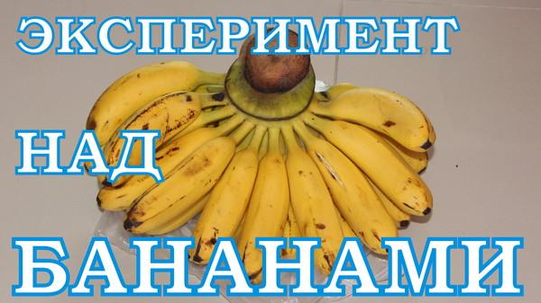 Эксперимент – как лучше хранить бананы