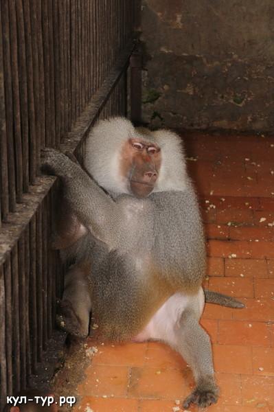 обезьяний питомник в Абхазии