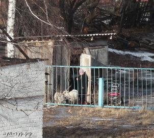 козы гуляют зимой