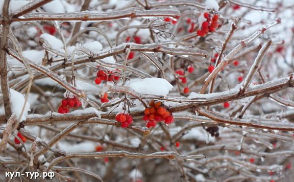 зимнии растения