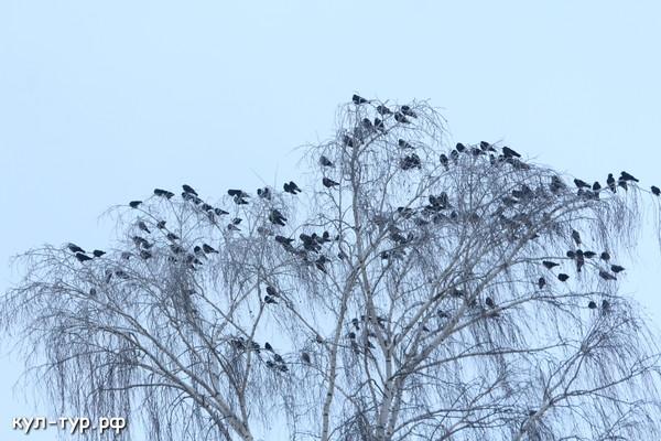 зимнии птици