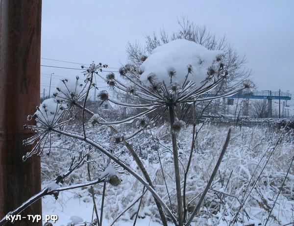фотки зимы