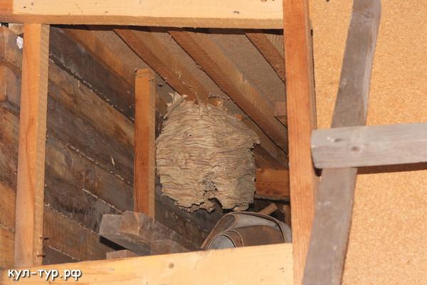 гигантское осиное гнездо