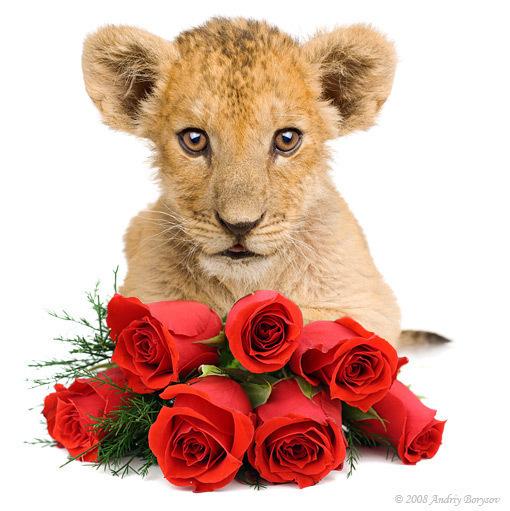 Прикольное поздравление с днем рождения львице 10