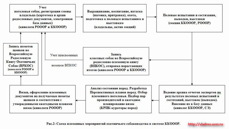 Схема племенных мероприятий охотничьего собаководства в системе ККОООР.