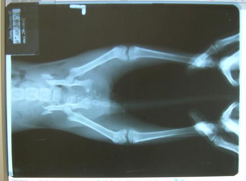 Травмы ануса фото фото 655-608