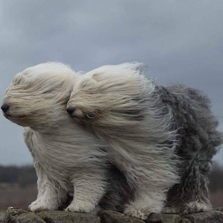 Сегодня ветер