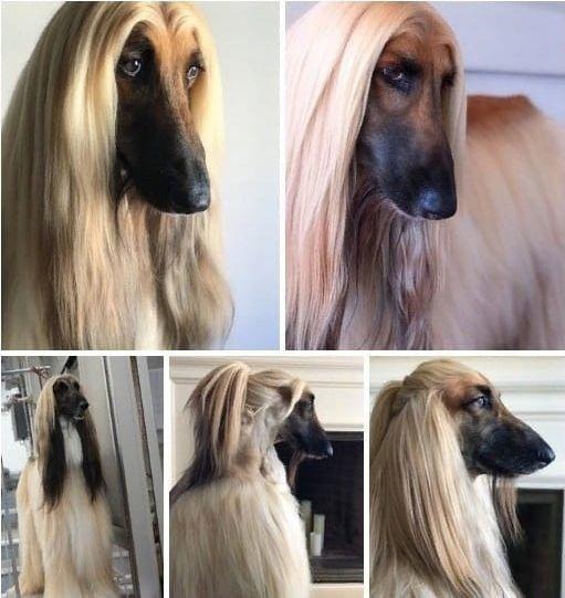 Некоторые женщины произошли от этой собаки