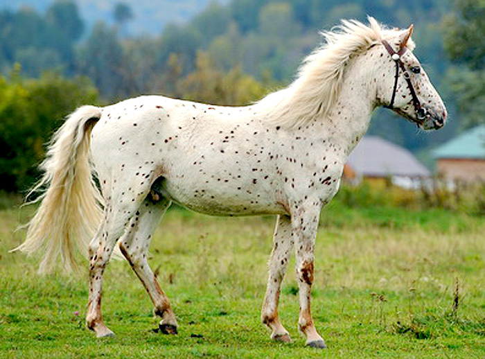 попки породы лошадей фото с названиями по алфавиту страстные