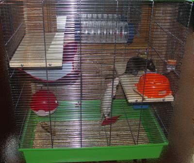 Как сделать домик для крысы 326