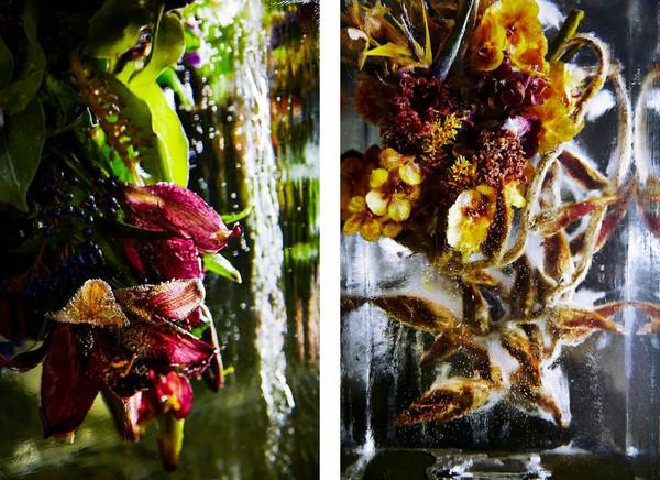 Японский флорист. Цветы во льду