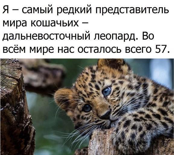 https://content.foto.my.mail.ru/community/feed_brain/_groupsphoto/h-72870.jpg