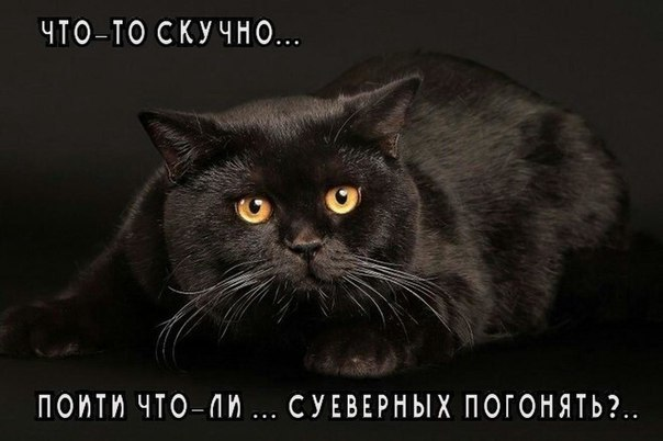 https://content.foto.my.mail.ru/community/humor.blog/_groupsphoto/h-25053.jpg