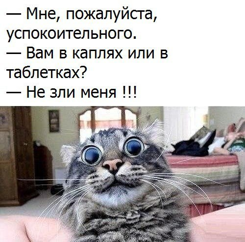 https://content.foto.my.mail.ru/community/laugh_humor/_groupsphoto/h-118851.jpg