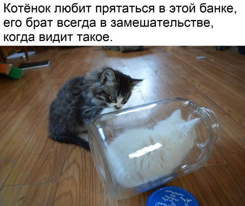 https://content.foto.my.mail.ru/community/laugh_humor/_groupsphoto/h-134266.jpg