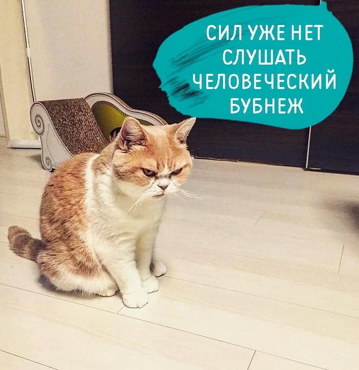 https://content.foto.my.mail.ru/community/mir/_groupsphoto/h-50882.jpg