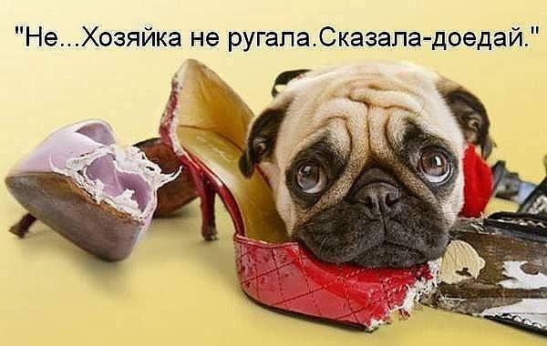 https://content.foto.my.mail.ru/community/society2/_groupsphoto/h-19543.jpg