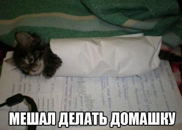 https://content.foto.my.mail.ru/community/to_many_things_to_laught_/_groupsphoto/h-164.jpg