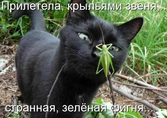 https://content.foto.my.mail.ru/community/www.smex.www/_groupsphoto/h-13807.jpg