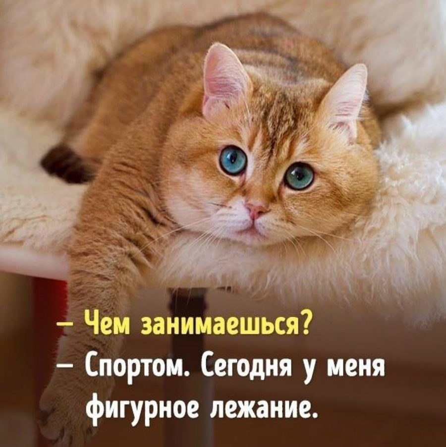 https://content.foto.my.mail.ru/community/www.smex.www/_groupsphoto/h-28314.jpg
