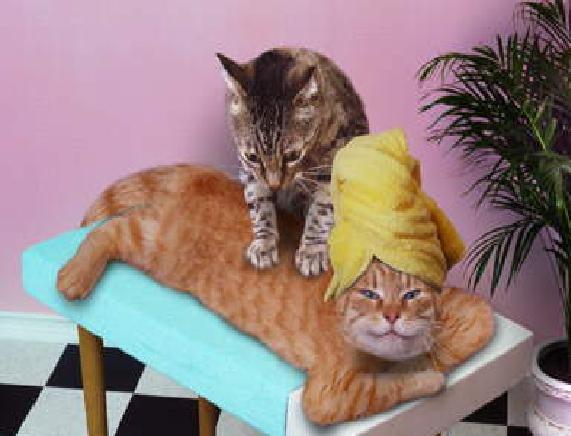 Кот василий отдыхает