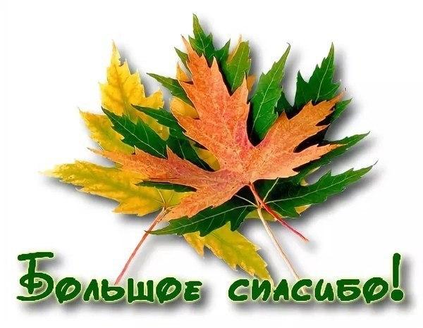 Осеннее спасибо открытки, днем