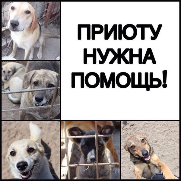 Картинки с просьбой о помощи животным