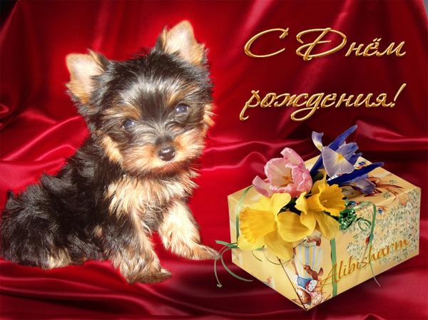 Открытки с собаками с поздравлением дня рождения