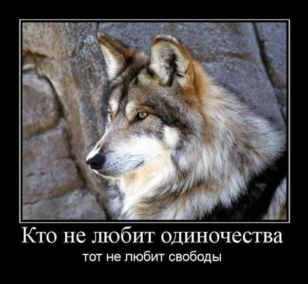 Веселые ребята, одинокий волк прикольная картинка