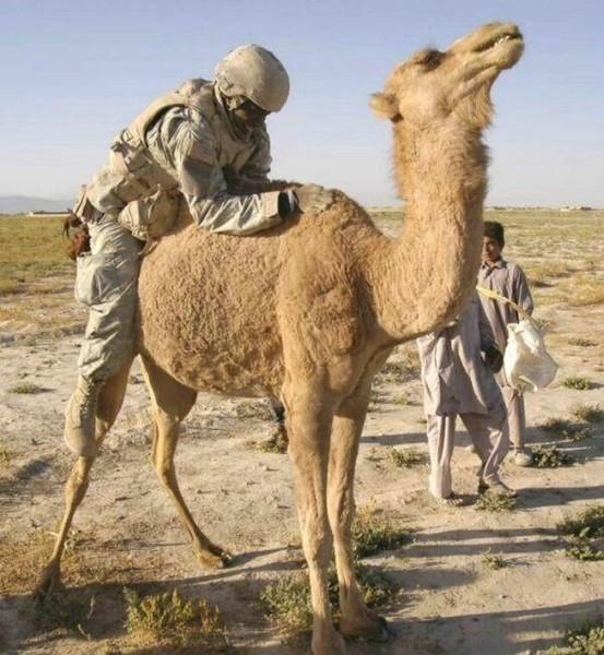Фото дня. Ирак. Наши дни.