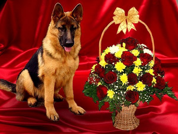 Открытки для поздравления собаки, котами британскими красивые