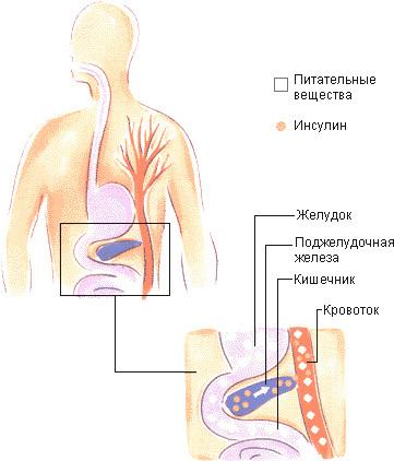 Эзотерика щитовидная железа
