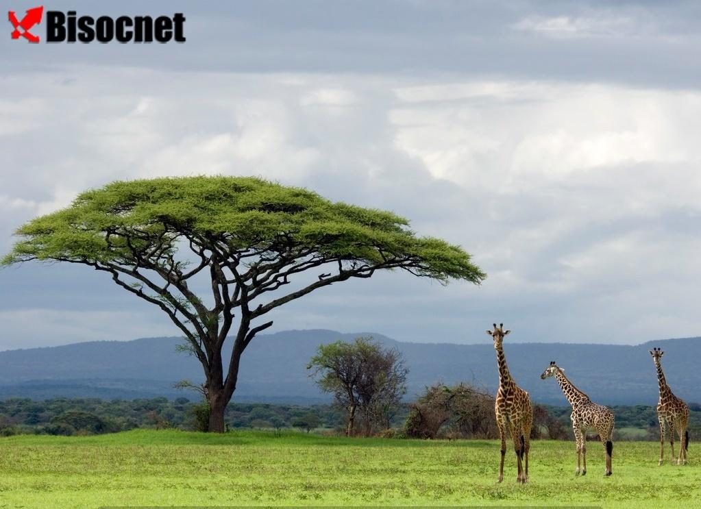 Национальный парк Серенгети: Танзания