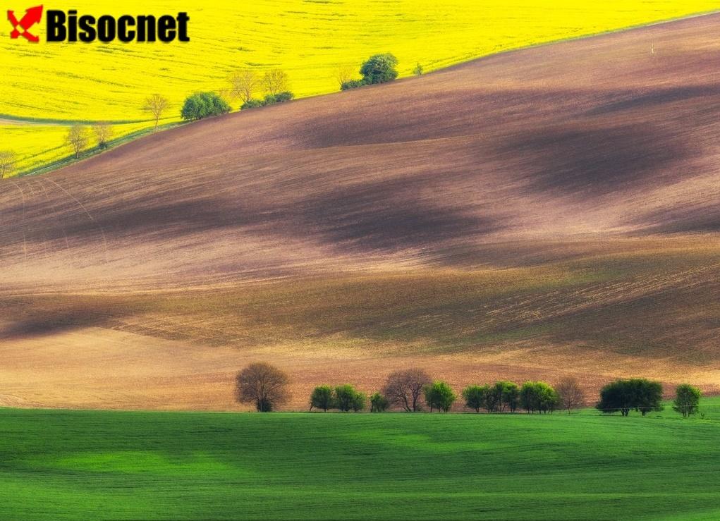 Моравские поля: Чехия