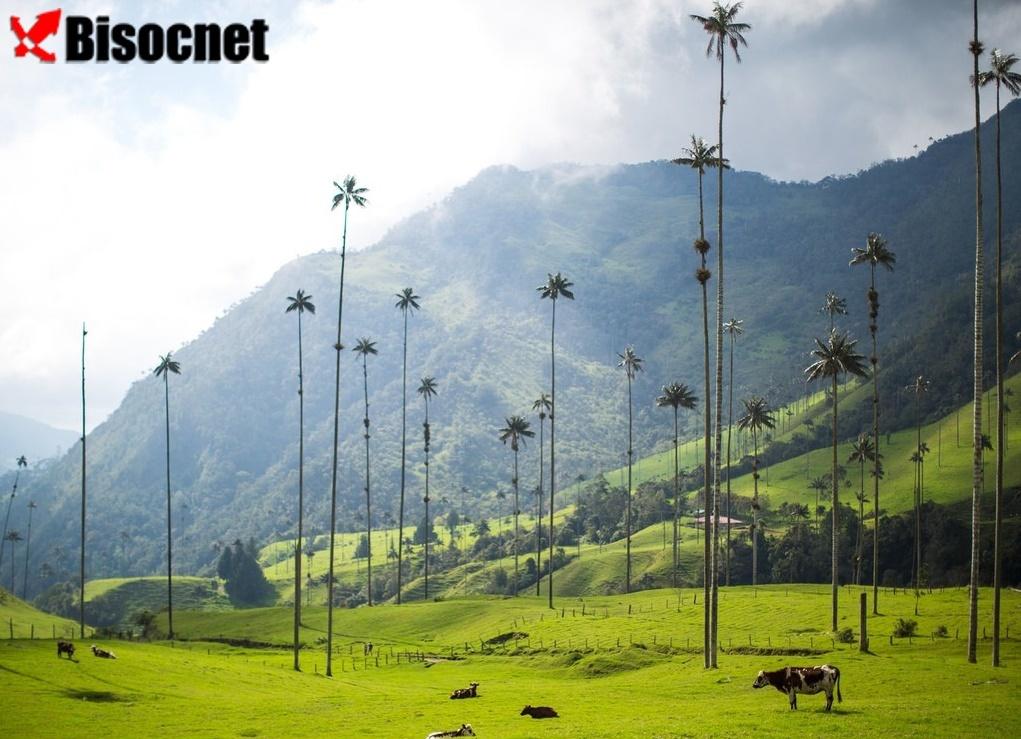 Валье-де-Кокора: Квиндио, Колумбия