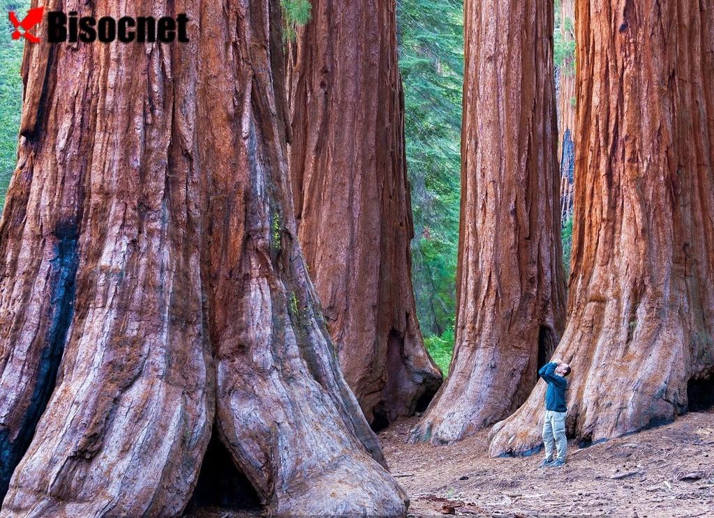 Национальный парк Редвуд: Калифорния