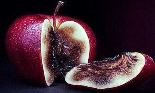 Сонник Адам и Ева