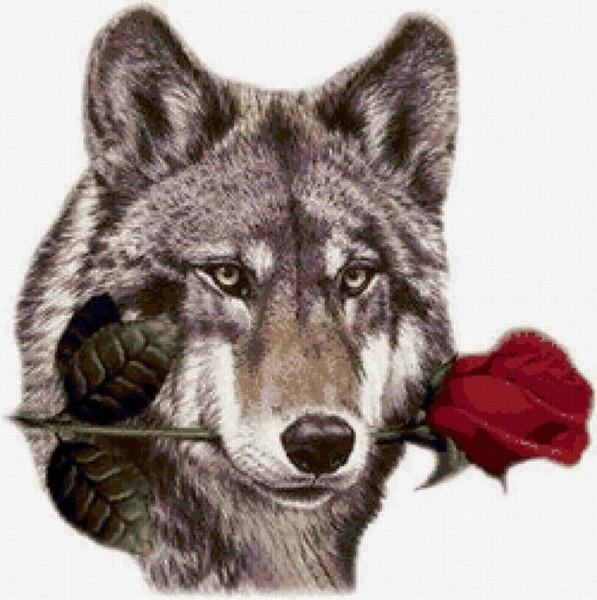 Картинка с днем рождения с волком красивая