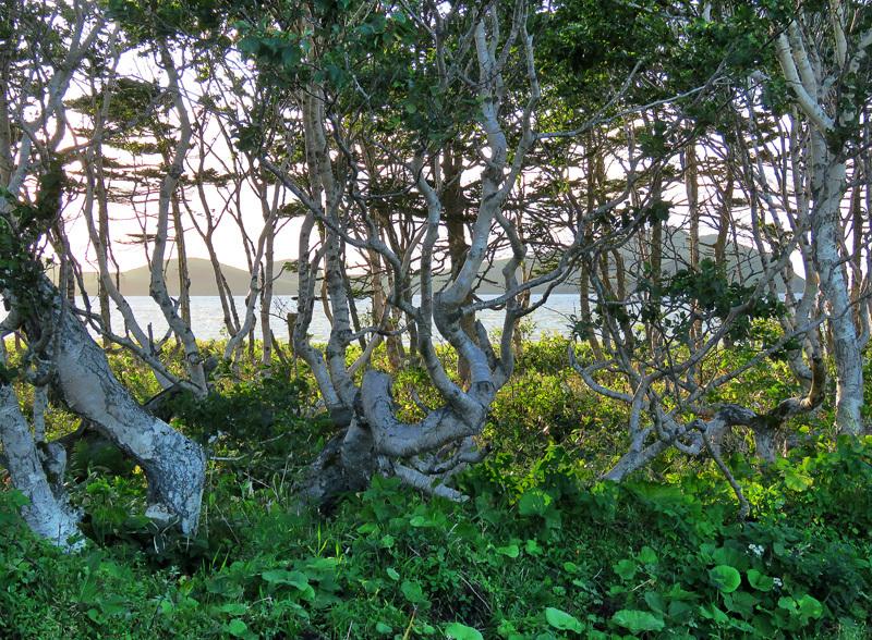 Кунашир. Часть 2: окрестности Южно-Курильска, или остров для островитян
