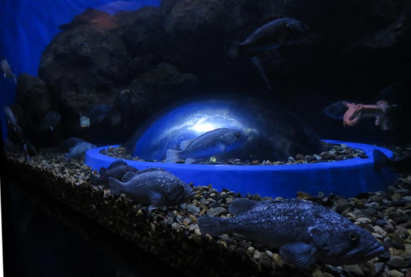 Остров Русский (Владивосток). Часть 2 (15): Приморский океанариум