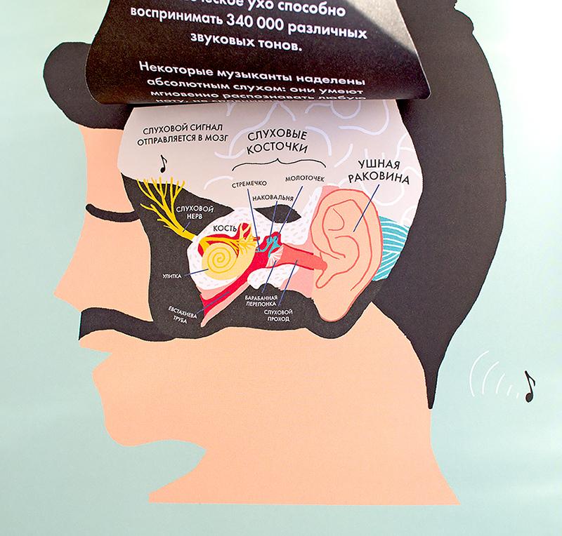 Необычные книги для детей: Анатомия, Все на борт Дискавери-экспресса, Маленький шеф. Отзыв