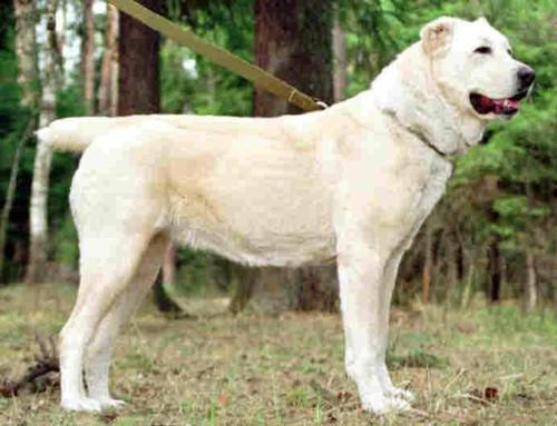 Собак можно с фото и описанием