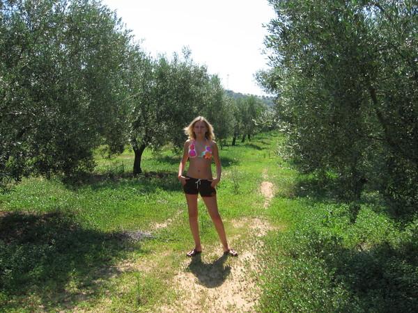 Оливковые деревья реально ВЕЗДЕ