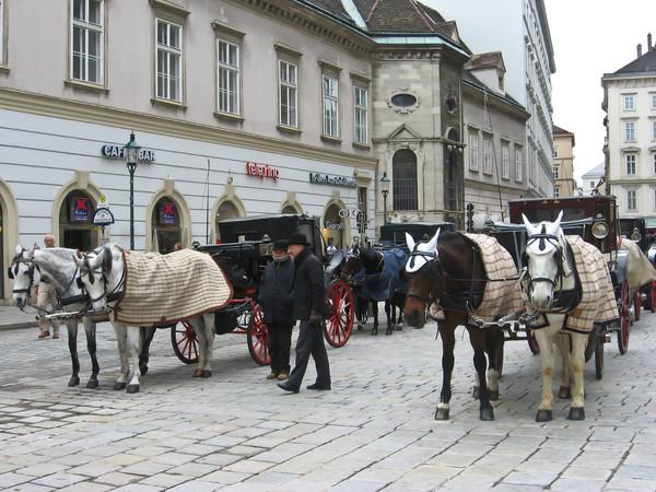 Главная венская фишка - конные экипажи...